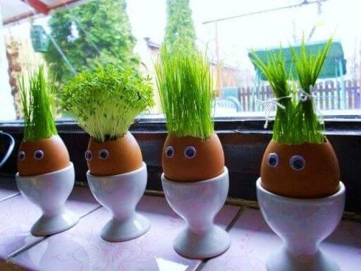 Egg shell seed cups